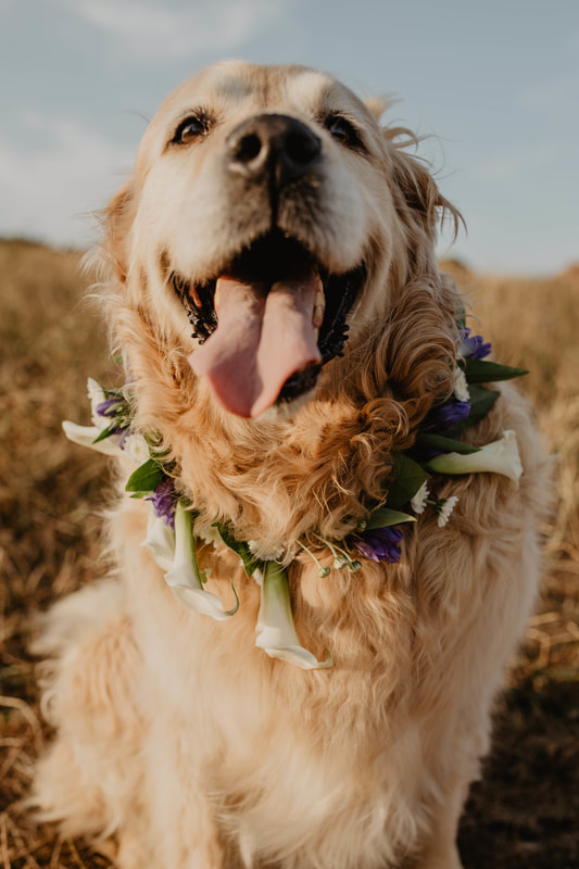 Wedding flowers for dogs photo shoot with Jordan Knight Florist, photos by Holly Cade - Alternative documentary style candid Wedding & Portrait Photographer. Available to shoot on the Isle of Wight, South Coast of England, throughout the UK and Worldwide.